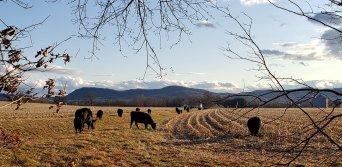 Hadley farm fields